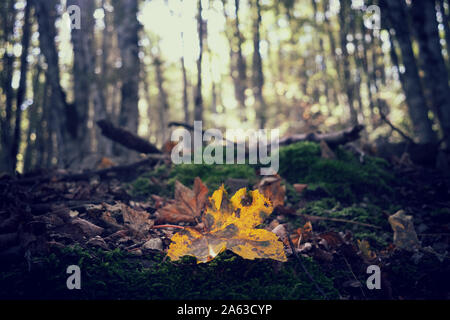 Orange leaves on the ground. Concept of fall and autumn - Stock Photo