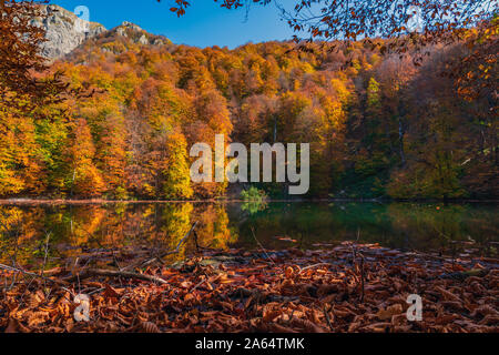 Yellow dry autumn leaves float in the lake - Stock Photo
