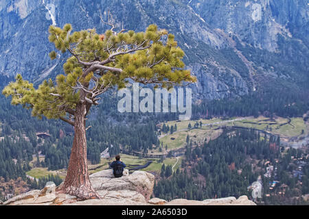 Man sitting under lonely tree on the peak of the rock