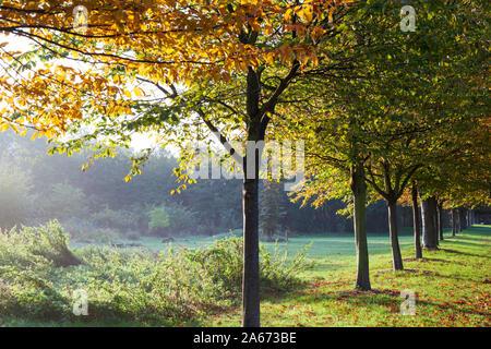 Row of autumnal trees in Haggerston Park, Hackney, East London, London, England, United Kingdom, Europe - Stock Photo