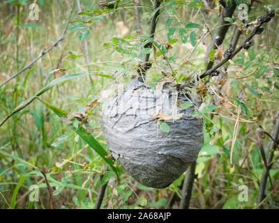 Vespiary or wasps nest at forest in summer - Stock Photo