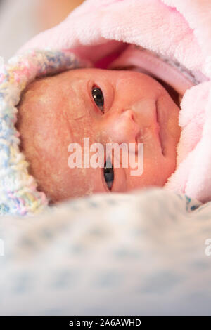 A young baby girl is born premature weighing just 4lbs, pictured here less than 5 minutes old - Stock Photo