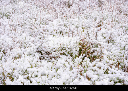 Fresh snow on the forest floor - Stock Photo