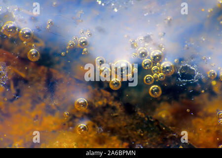 A stagnant water body and its surface. Rotten algae on the bottom and bubbles of marsh gas. Window into world of ultra macro - Stock Photo
