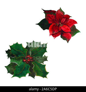 Watercolor poinsettia with Christmas floral decor with hand painted traditional flower and plants: holly berries - Stock Photo