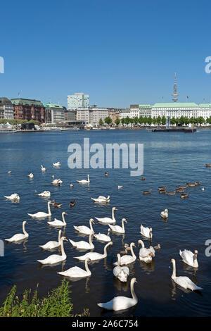 swans on Lake Inner Alster, Hamburg, Germany - Stock Photo