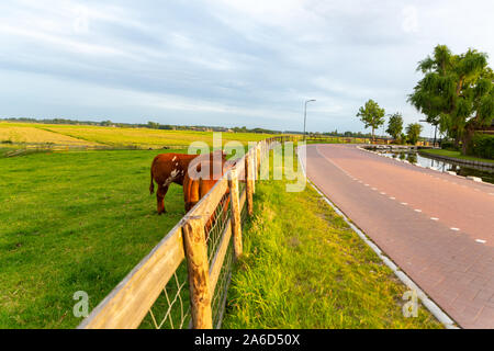 ranch along the way with two cattle cow grazing - Stock Photo