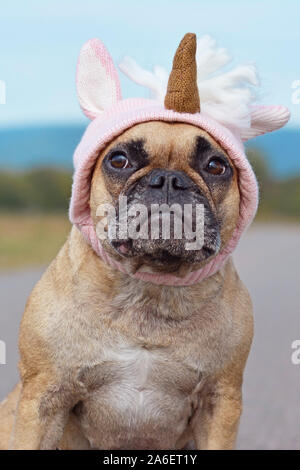 Cute French Bulldog dog dressed up with Halloween costume in shape of pink knitted unicorn hat - Stock Photo