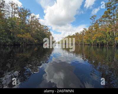 Fisheating Creek, Florida - September 22, 2018: Woman kayaks on calm water amidst reflected clouds and bald cypress trees in autumn. - Stock Photo