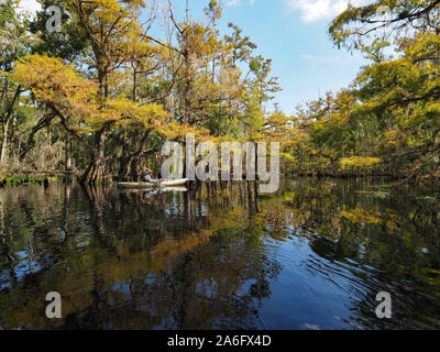 Fisheating Creek, Florida - September 22, 2018: Active senior kayaks amidst reflected cypress trees and clouds on a calm autumn afternoon. - Stock Photo