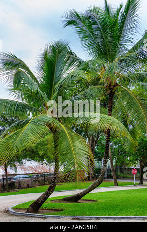Coconut trees grow out of an island of grasss in a circular driveway under cloudy skies. - Stock Photo