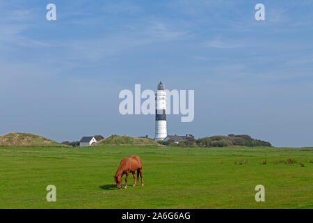 A horse is grazing in  front of the lighthouse of Kampen on Sylt Island, Schleswig-Holstein, Germany. - Stock Photo