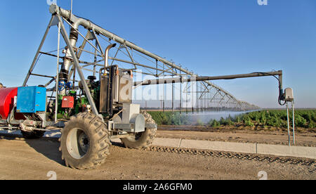 Linear Self Propelled Irrigation System operating, Hemp  'Frosted Lime' strain,  maturing in field,  'Cannabis sativa', field workers. - Stock Photo