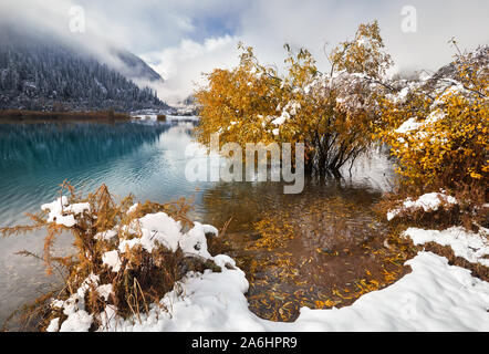 Beautiful yellow tree in the lake Issyk at lakeside with snow at autumn time in Kazakhstan, Central Asia - Stock Photo
