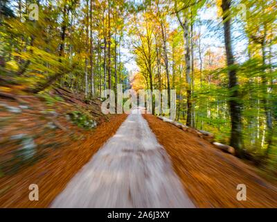 Fast driving through forest country-side countryside countryroad road intentionally blurry speeding blur unsharp - Stock Photo