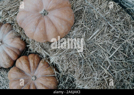 ripe pumpkins and hay after the harvest in autumn - Stock Photo