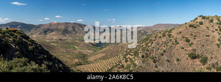 Panorama over vineyards for port wine production line the hillsides of the Douro valley at Barca de Alva in Portugal - Stock Photo