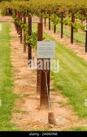 A selected area with cut grass for the benefit  of visitors is Jacobs Creek in the  Barossa Valley  wine growing region near Adelaide, Australia. - Stock Photo