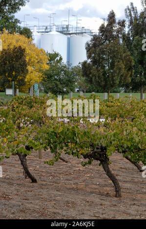 the Wolf Blass wine estate visitors centre in the Barossa Valley near Adelaide in Victoria - Stock Photo