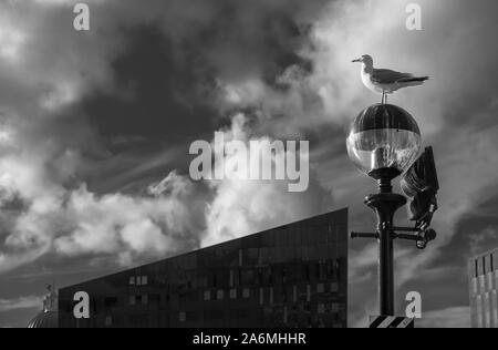 Seagull sitting on top of a lamp post at the Liverpool Docks in Liverpool, UK. Cloudy sky as a background. Lamp post is filled with bird crap. Shot in - Stock Photo