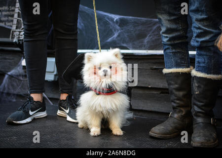 London, UK. 27th Oct, 2019. Dog lovers came together in Hampstead Heath in London for a Halloween dog extravaganza, organised by All Dogs Matter. Dogs competed for the Spookiest Dog award. (Photo by Laura Chiesa/Pacific Press) Credit: Pacific Press Agency/Alamy Live News - Stock Photo