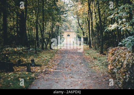 Path in the forrest - Stock Photo