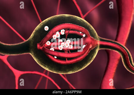 Neurons and neural system, Neuron Impulses, Neuron cells, 3d rendered video of a neuron cell network flight through, Urinary System, Human Internal Or - Stock Photo