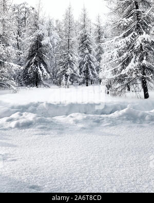 footpath in deep snowdrift in forest in snow-covered coniferous forest on winter day - Stock Photo