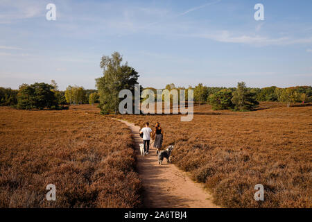 Haltern am See, Muensterland, North Rhine-Westphalia, Germany - Westruper Heide, a young couple with dogs walking hand in hand on a path through the h - Stock Photo
