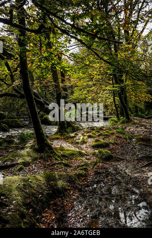 The River Fowey flowing through the ancient woodland of Draynes Wood at Golitha Falls in Cornwall. - Stock Photo