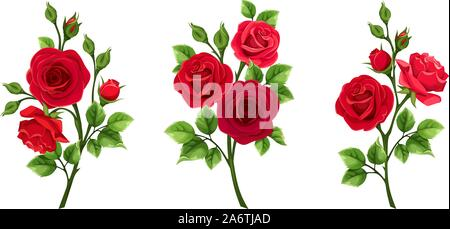 Vector set of branches of red roses isolated on a white background. - Stock Photo