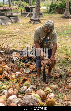 Ko Samui Island, Thailand - March 18, 2019: Gray haired man performs phase one of the coconut processing: dehusking exocarp of harvested coconut using - Stock Photo