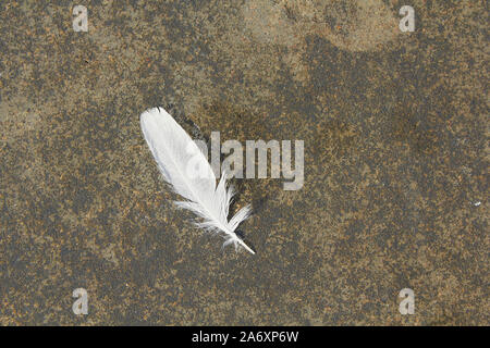 white feather on dirty concrete surface - Stock Photo