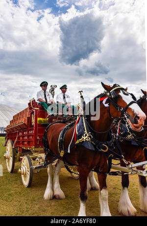 Budweiser Clydesdales  Stagecoach Festival in Indio, California - Stock Photo