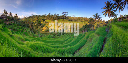 Indonesia, Bali, Ubud, Tegallalang/Ceking Rice Terraces - Stock Photo