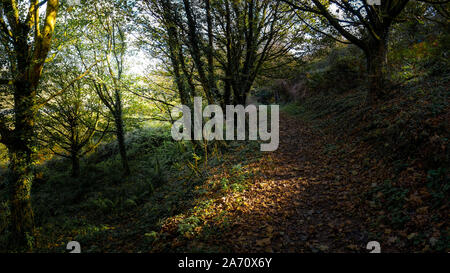 A panoramic view of a footpath amongst trees in a woodland in Newquay in Cornwall. - Stock Photo