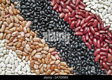 some varieties of  beans: black turtle ; red rajma;pinto ; white - Stock Photo