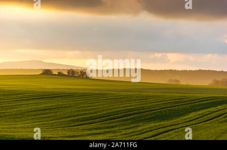 hazy rural evening landscape with golden light and group of trees in the distance. grey hills in the background and agricultural field in foreground