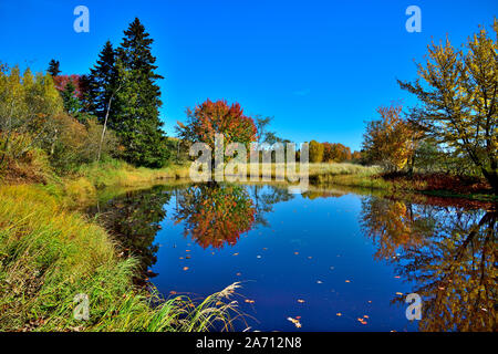 A horizontal landscape image of a maple tree with its leaves turning the colors of fall reflecting in a blue pond of still water in rural New Brunswic - Stock Photo