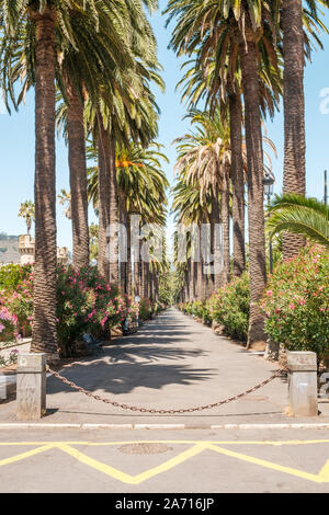 sidewalk walkway under palm trees - palm tree alley way  -