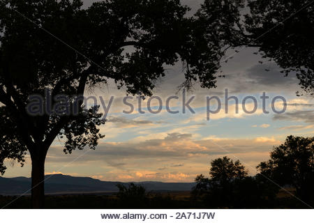 Trees silhouette against a sunset sky at Ghost Ranch, New Mexico, USA. - Stock Photo