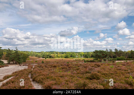 Panoramic view over Frensham Little Pond with heather and footpaths, a popular beauty spot for walkers near Farnham, Surrey, south-east England - Stock Photo
