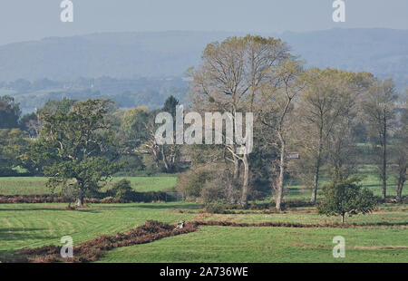 Autumn rural View across meadows from Parham Park to the South Downs Stock Photo