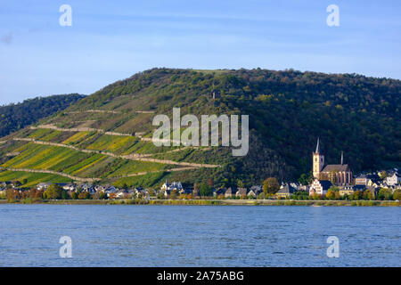 Terraced vineyards along Rhine at Lorch, Germany - Stock Photo