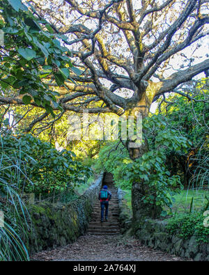 Man walking up stairs under large tree leading to the unknown. - Stock Photo