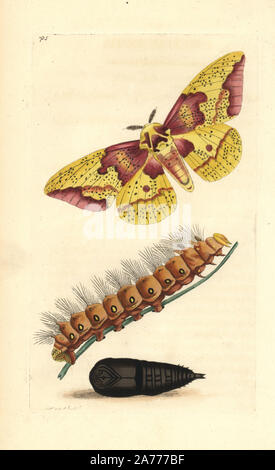 Imperial moth, Eacles imperialis, with caterpillar and pupa. Illustration drawn and engraved by Richard Polydore Nodder. Handcoloured copperplate engraving from George Shaw and Frederick Nodder's 'The Naturalist's Miscellany,' London, 1805.