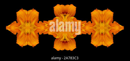 Yellow orange ornamental decoration created of macros of daylilies on black background in vintage painting style - Stock Photo