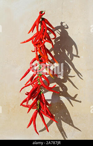 string of chilli peppers Latin capsicum variety cayenne drying in the sun in Italy in late summer - Stock Photo