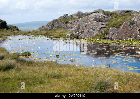 Small Mountain Lake with water lillies at Connemara, County Galway Ireland - Stock Photo