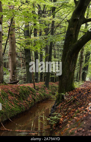 autumn forest in holland with a small river red and green colors - Stock Photo
